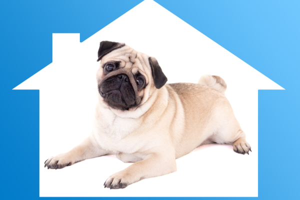Pets in Rental Properties